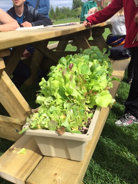"Mesclun with a harvesting ""haircut"""